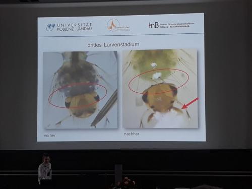 Mikrosopie einer Insektenlarve